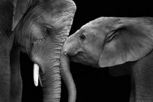 Load image into Gallery viewer, Elephants paint by Number kit
