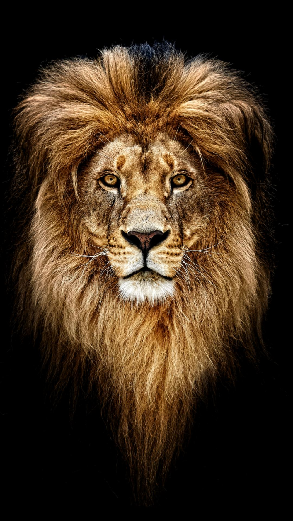 Lion Painting By Number kit