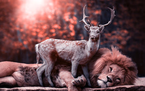 Lion_Deer Painting DIY Kit