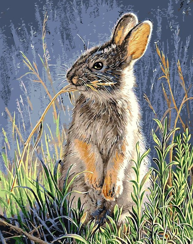 Cute Rabbit paint by numbers