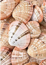 Load image into Gallery viewer, Sea Shells Paint By number