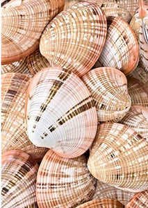 Sea Shells Paint By number