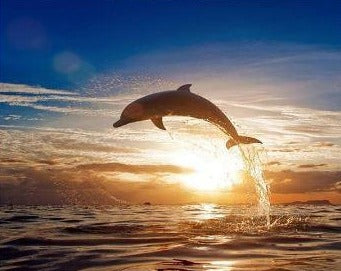 Jumping Dolphin Under The Sunset - Painting Kit