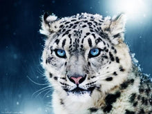 Load image into Gallery viewer, Snow Leopard Paint By Number