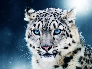 Snow Leopard Paint By Number