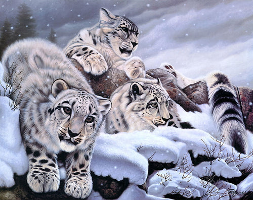 Snow Leopards Painting By numbers
