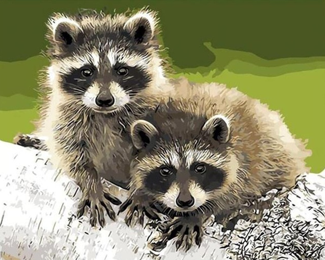 Two Raccoons paint by numbers