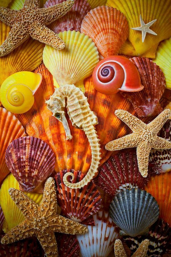 shells and star fish painting by number