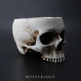 Skull Plant Pot - Mysterious Shop