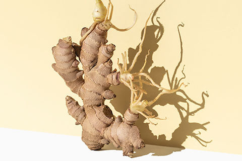 Ingredient Spotlight: Ginger Root 101.