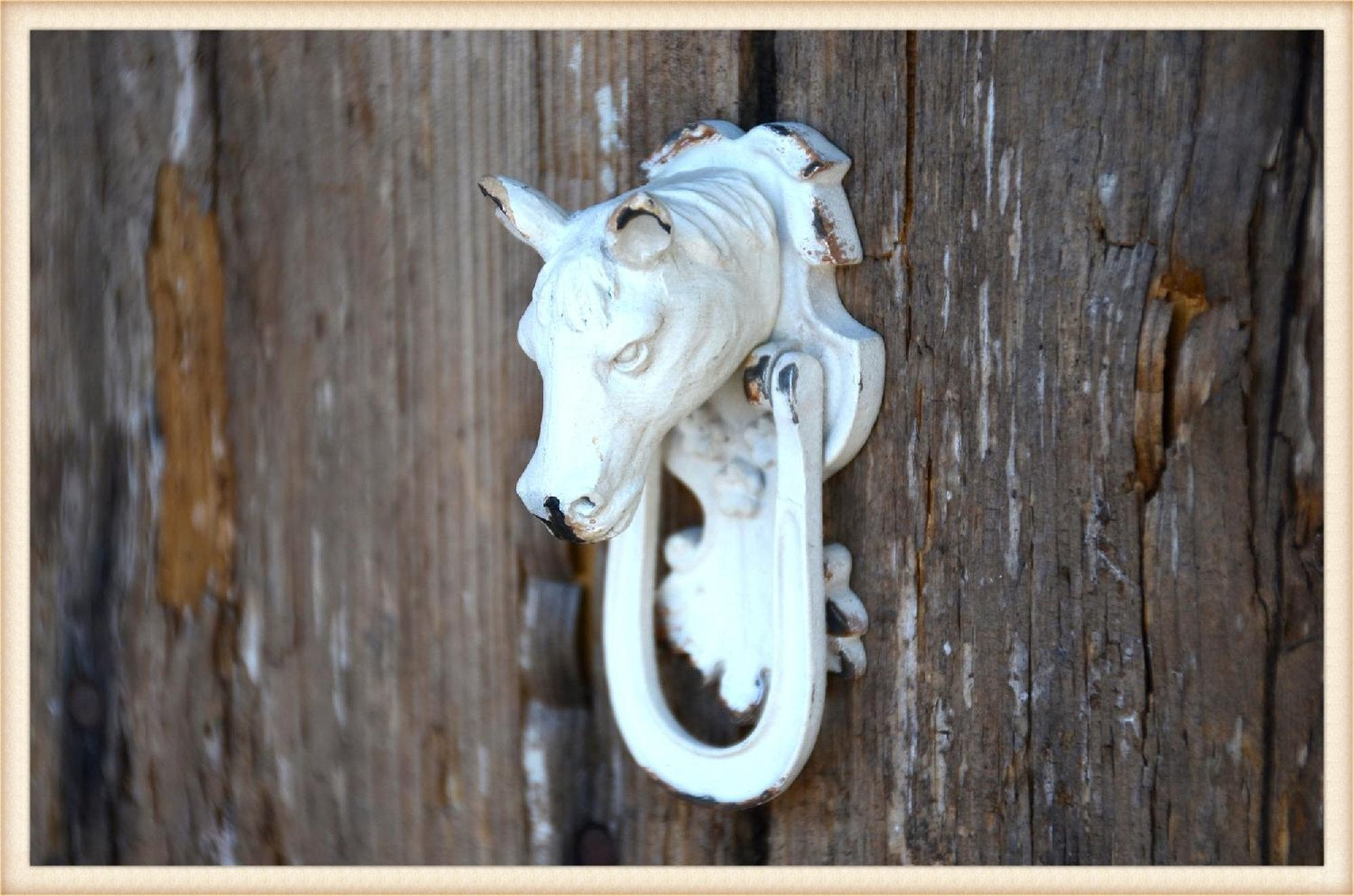 Horse Knob~set of four