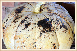 Rusty Pumpkin Large - Seasonal-Fall