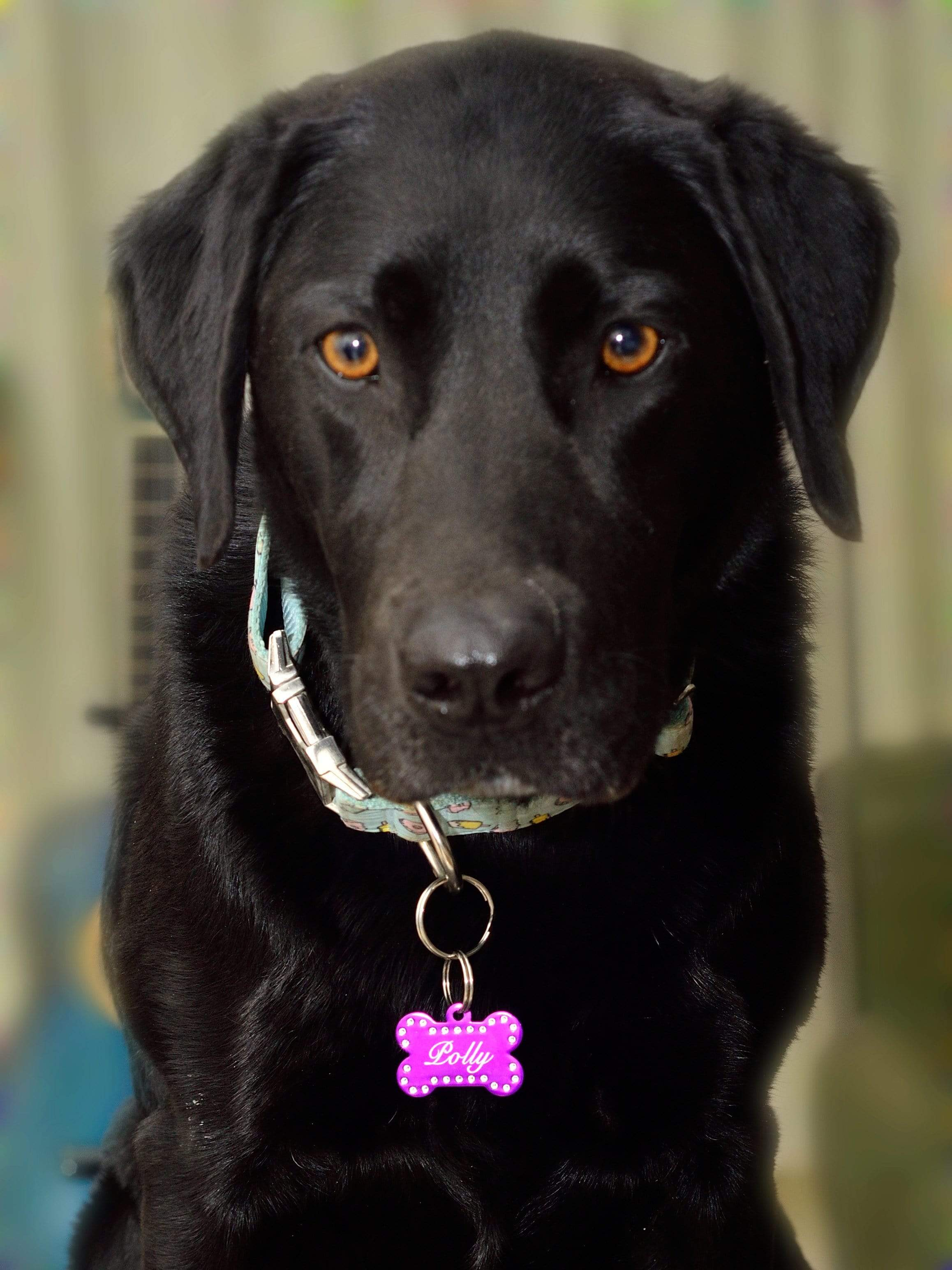 Personalised Swarovski Crystal Pet ID Tag Pet Tag Pet ID Tags