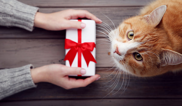 18 Gifts For Cats And Cat Lovers