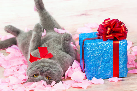 Best Gifts For Cats And Cat Lovers