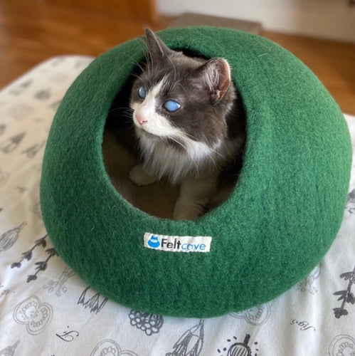 Louie inside his Green Cat Cave