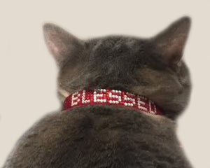 "Red or Black ""Blessed"" Rhinestone Crystal Break-Away Kitty Cat Collar with Bell"