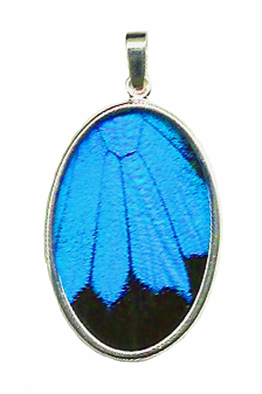 Blue Swallowtail Butterfly Pendant size large