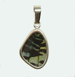 Butterfly Wing Pendant Green Banded Urania Leilus Extra Small Wing Shape