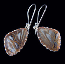 Load image into Gallery viewer, Pearl Blue Morpho Butterfly Earrings in Extra Small
