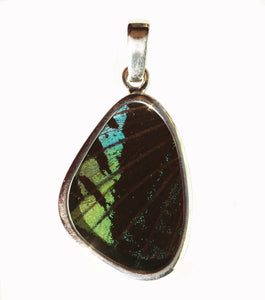 Butterfly Wing Pendant Green Banded Urania Leilus Small Wing Shape
