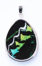 Load image into Gallery viewer, Butterfly Wing Pendant Green Banded Urania Leilus Medium Pear Shape