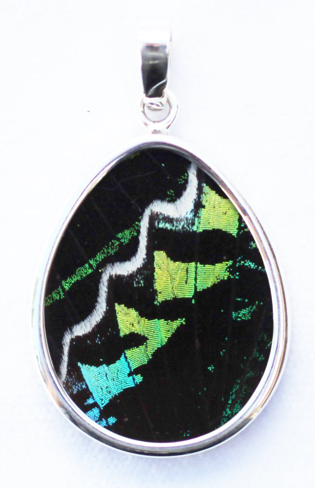 Butterfly Wing Pendant Green Banded Urania Leilus Medium Pear Shape