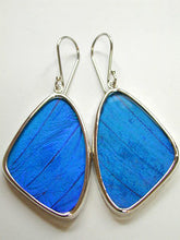 Load image into Gallery viewer, Blue Morpho Butterfly Earrings Large Size