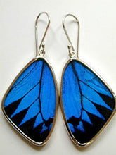 Load image into Gallery viewer, Blue and Black Swallowtail Butterfly Earrings Large