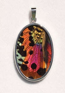 Sunset Moth Butterfly Wing Pendant Large Oval