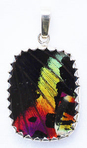 Sunset Moth Butterfly Wing Pendant size medium
