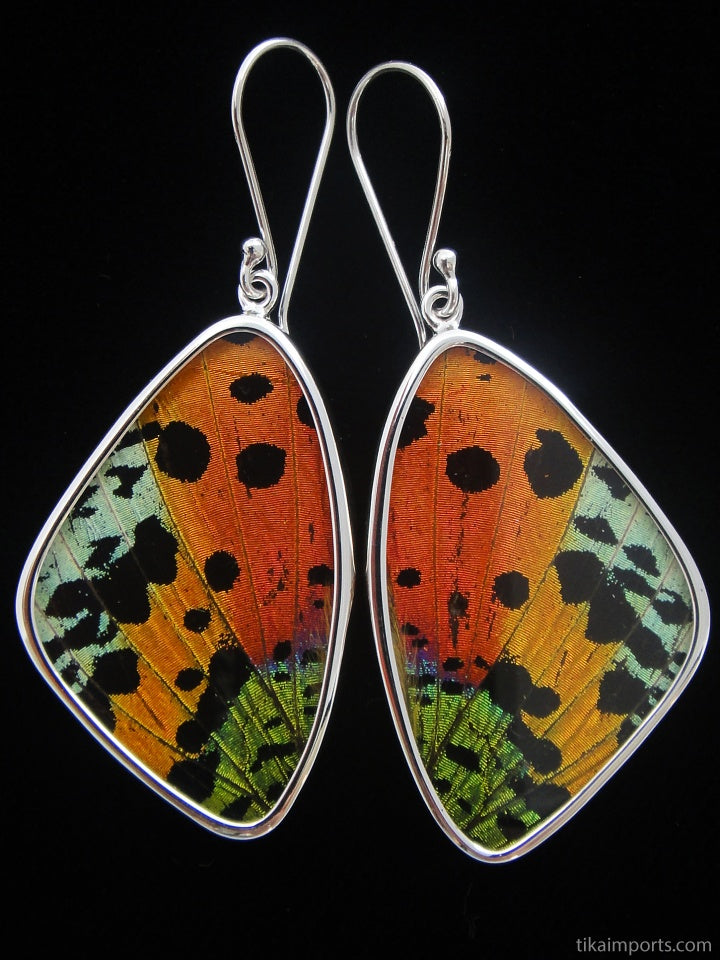 Sunset Moth Butterfly Wing Earrings size large