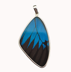 Butterfly Wing Pendant Black and Blue Swallowtail in Extra Large Size