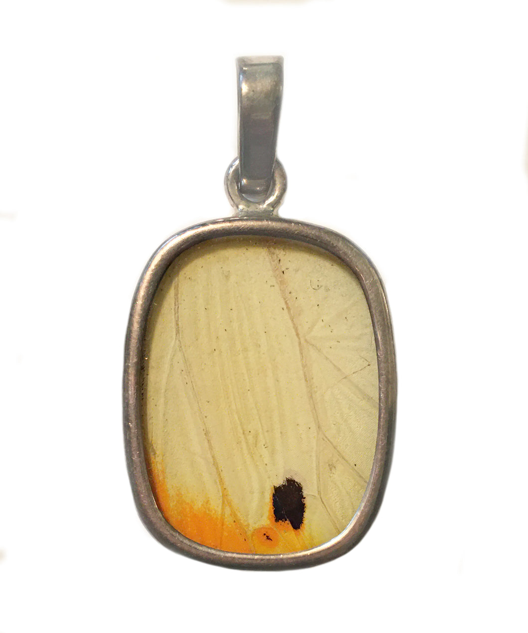 Butterfly Wing Pendant of Great Orange Tipped Butterfly in Small Oblong Shape