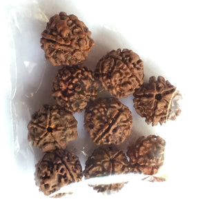 Rudraksha Mala Beads Seven 16mm Beads