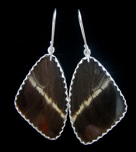Blue and Black Swallowtail Butterfly Earrings Large