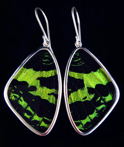 Butterfly Wing Earrings Green Banded Large