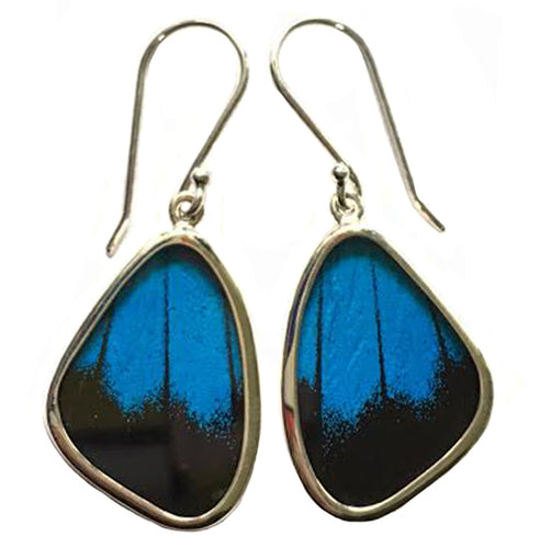 Black and Blue Swallowtail Butterfly Earrings in Small Size