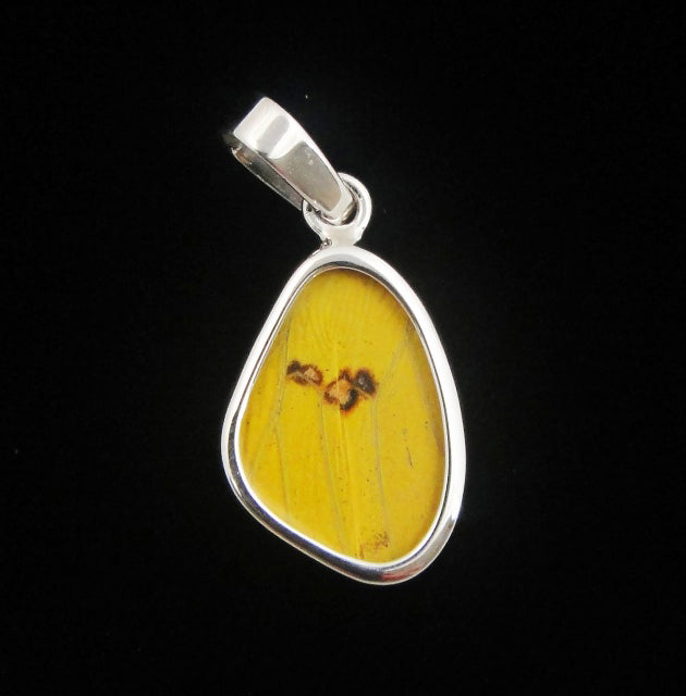 Butterfly Wing Pendant Yellow Phoebis Phillea in Extra Small Size
