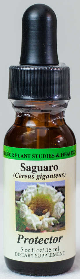 Saguaro (Protector) Flower Essence  - Center for Plant Studies & Healing Arts.
