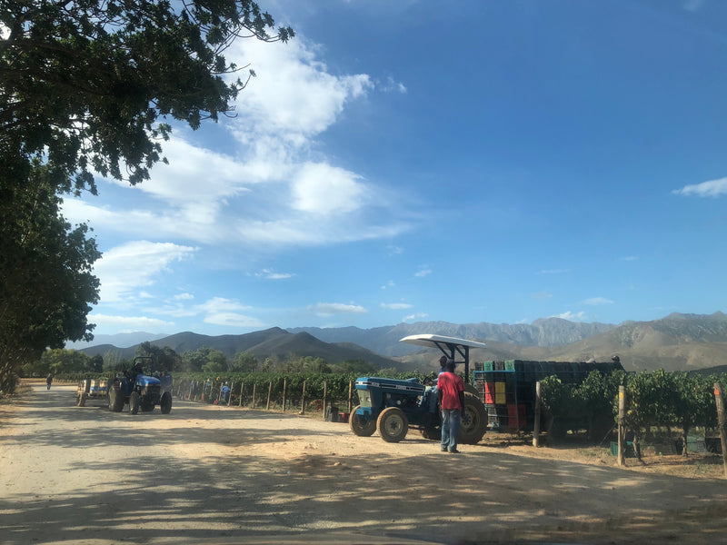 South African Wine Farms Close during 21 day Lockdown [Covid -19]