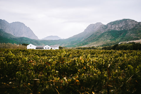 Franschhoek vineyards - photo by Matthijs van Schuppen