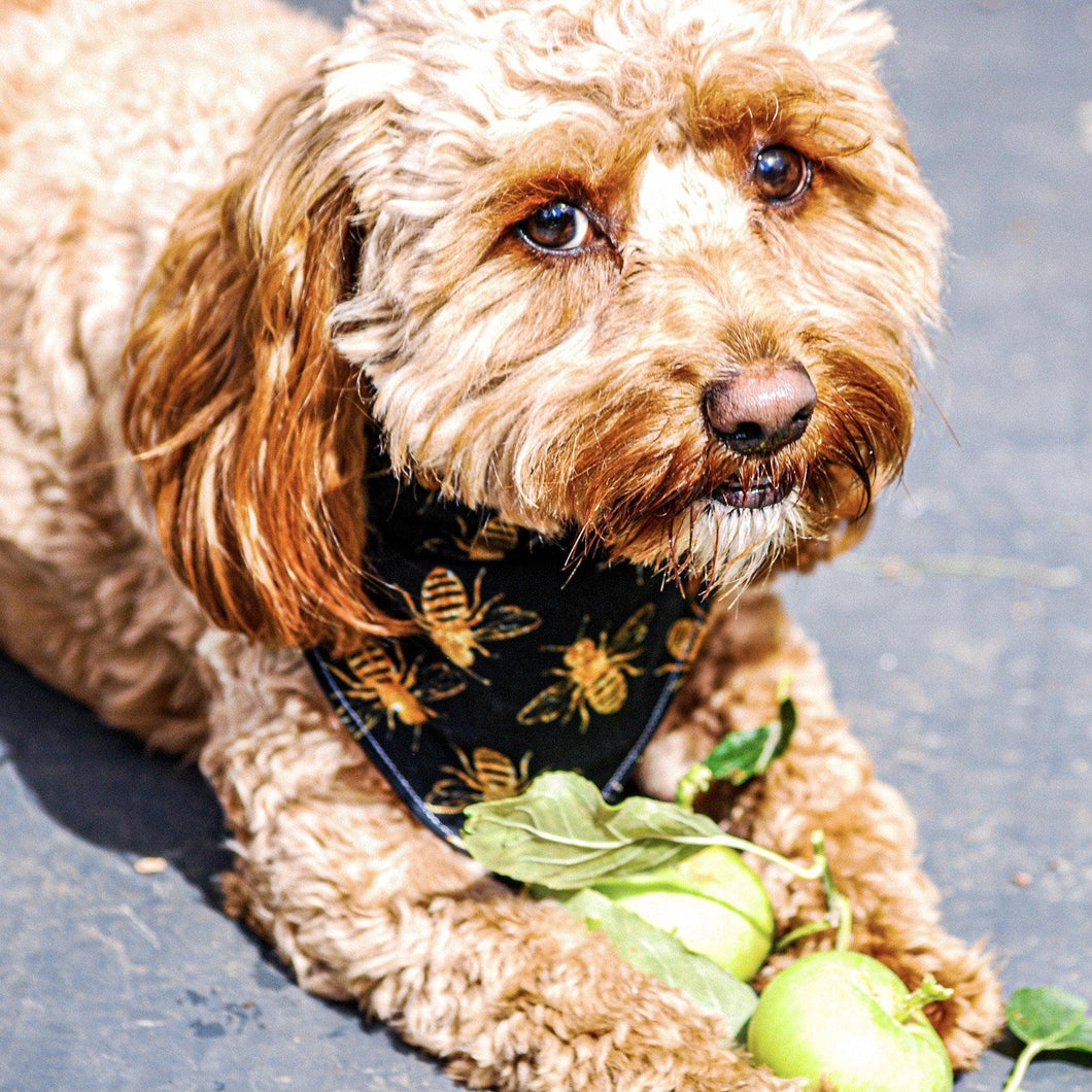 Golden Bee Pet Bandana