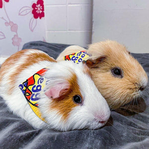 Assorted Designs Guinea Pig Bandanas - The Collective Wolf