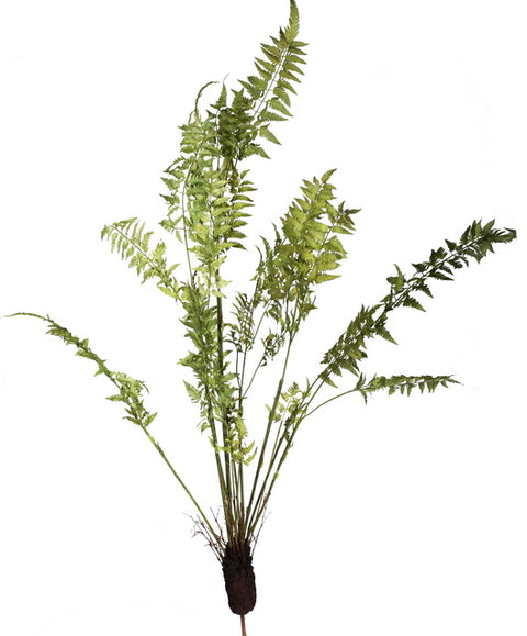 Single Fern in Earth Frond