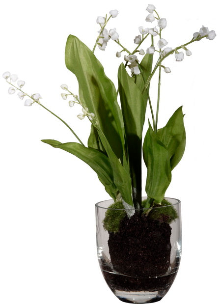 Lily of the Valley with Soil in Glass Vase
