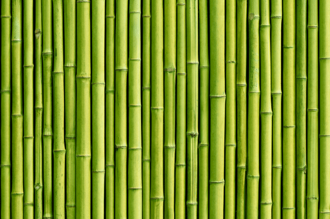 Bamboo: benefits and advantages of an eco-friendly plant