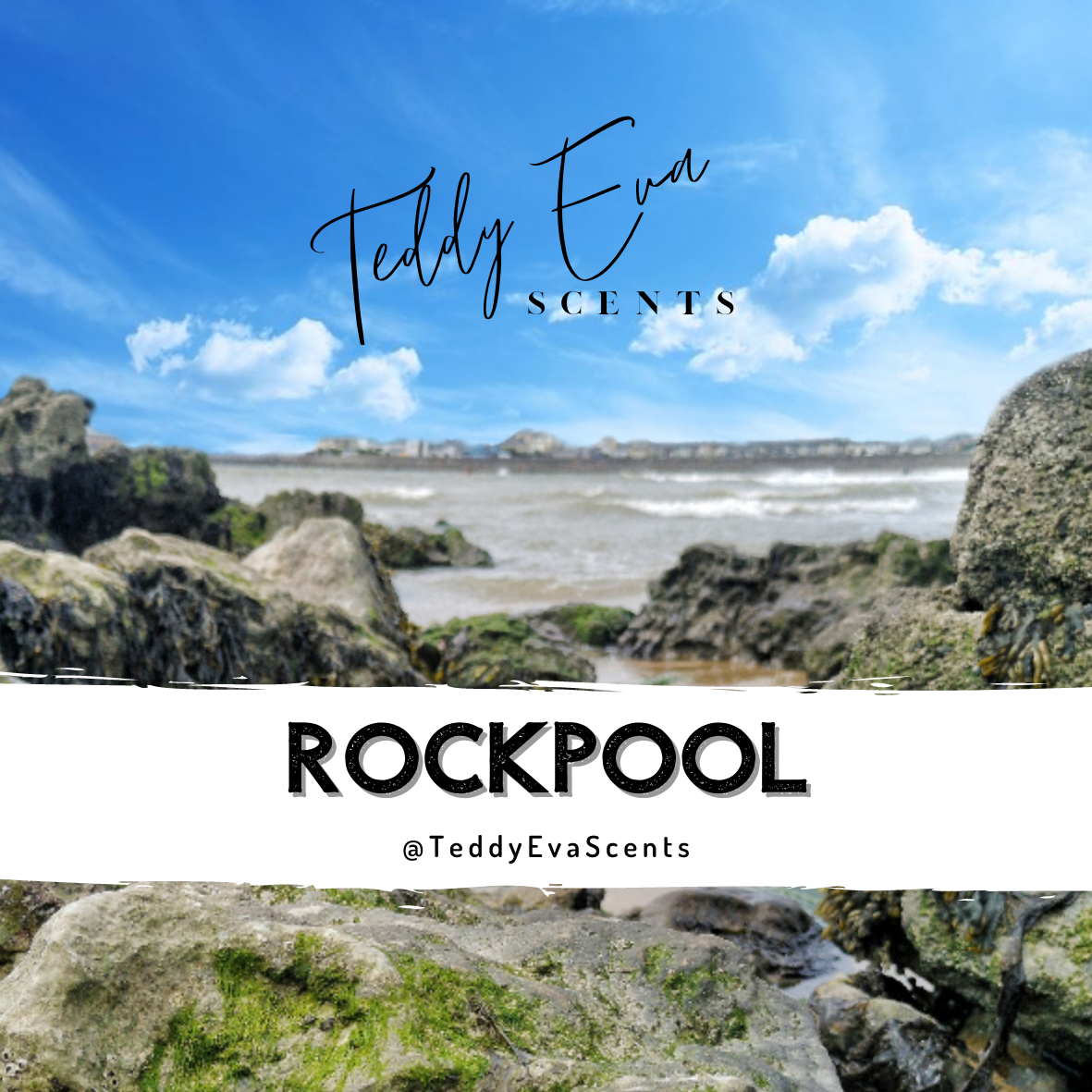 Rockpool Teddy Pot