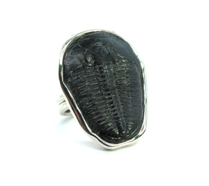 Large Triolobite Fossil ring in hand made sterling silver