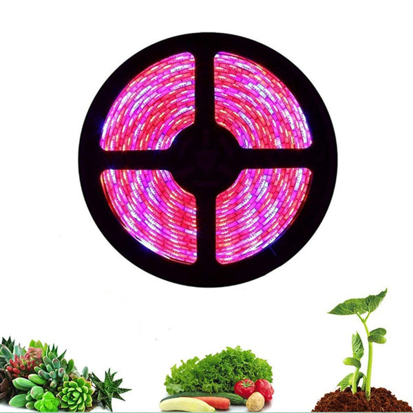 led grow light strip 5M 5050 Full Spectrum Flower Plant Phyto Growth lamp for indoor Greenhouse Hydroponic grows lights 12V tent - mbrbproducts